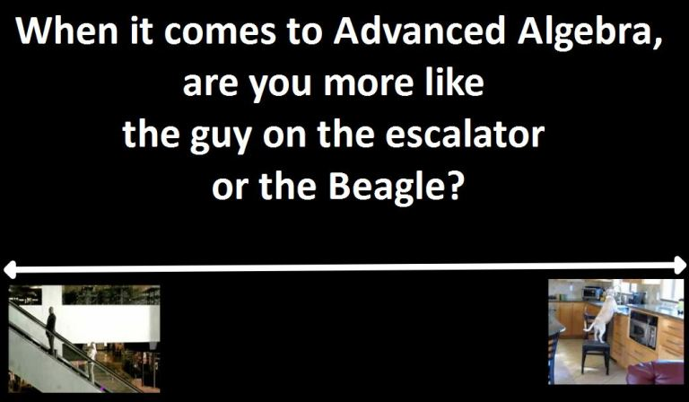 escalator or beagle