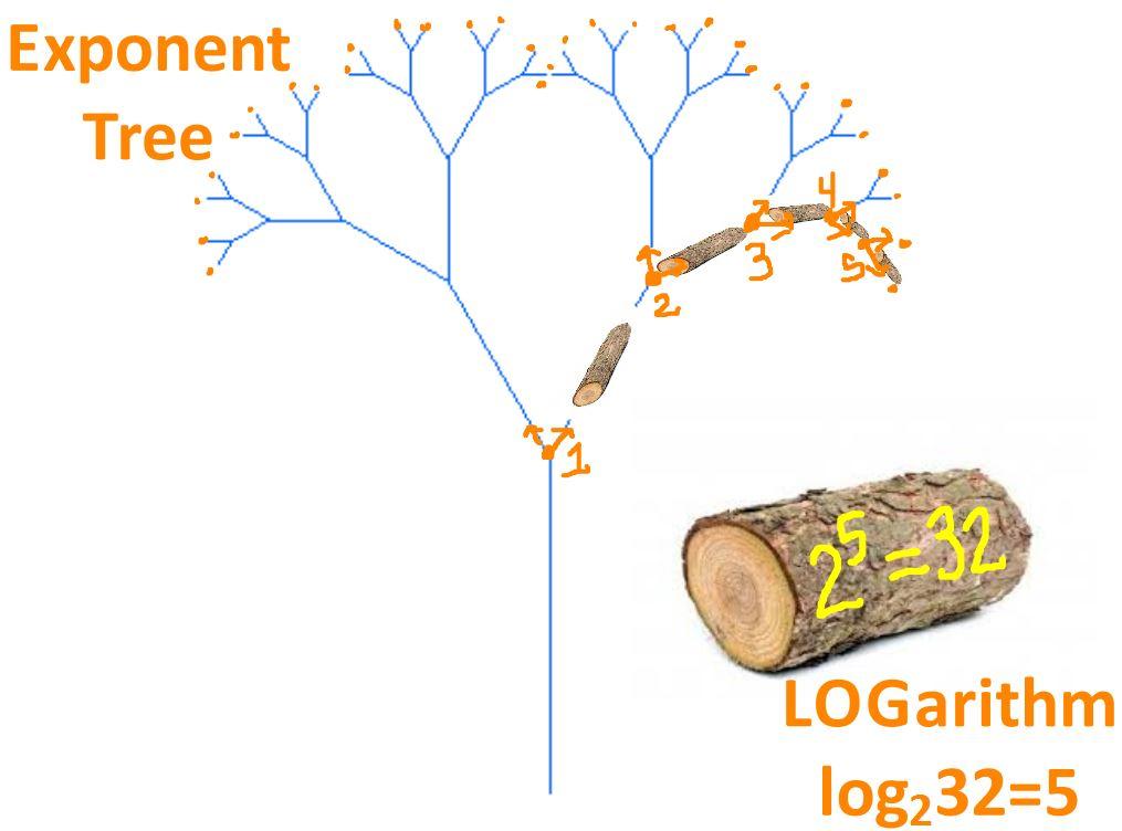 log exponent tree 2